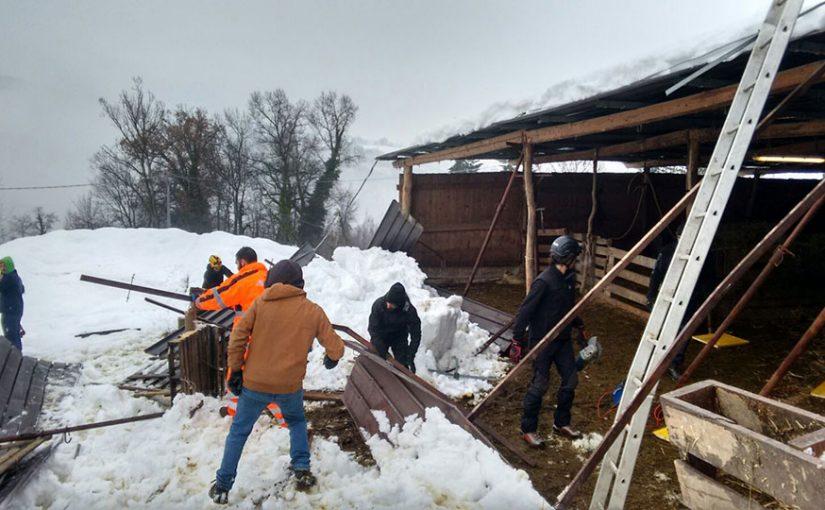Report fotografico dei lavori all'Azienda Bio Marchese Marino di sabato 21 gennaio