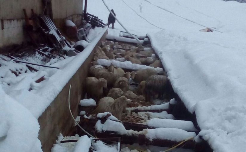 Neve e terremoto il 18/01/17: nuovi crolli all'Azienda Agricola Marchese Marino